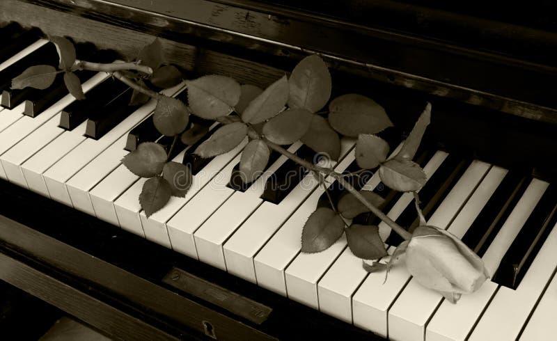 吊唁卡片-在钢琴上升了 库存图片