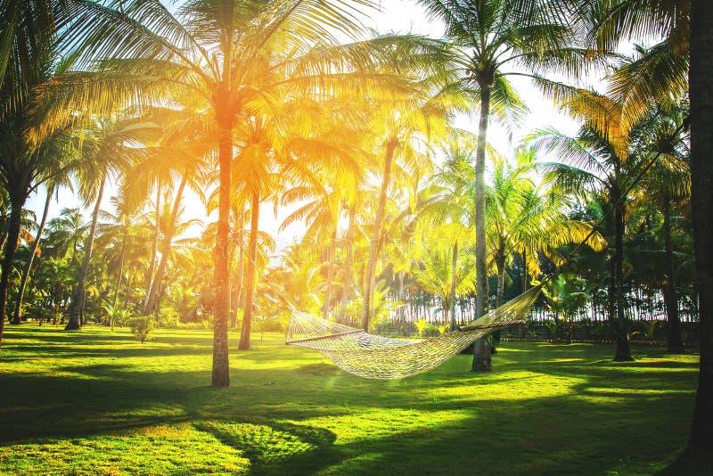 吊床在热带可可椰子树丛里图片