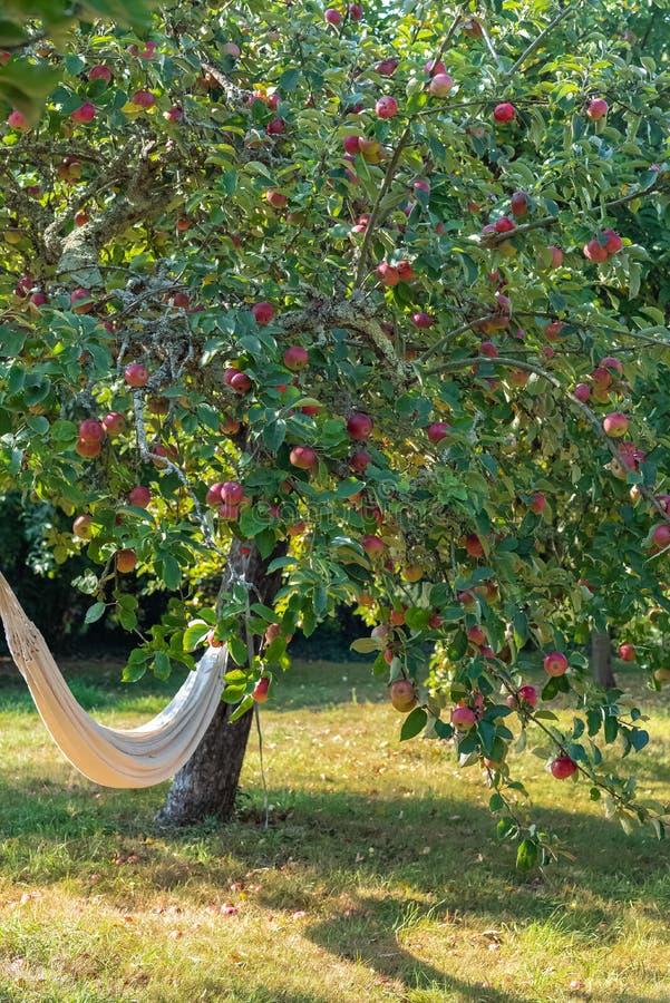 吊床在苹果树下 免版税库存图片