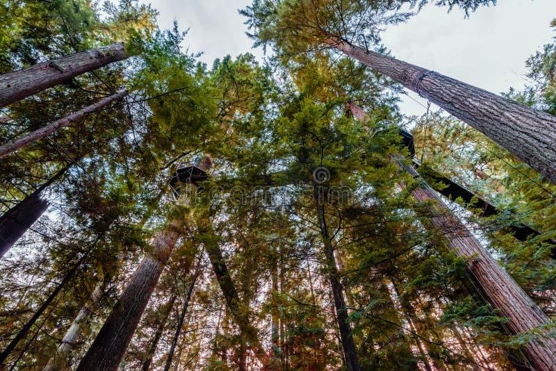吊桥在高,绿色树之间的森林里 库存图片