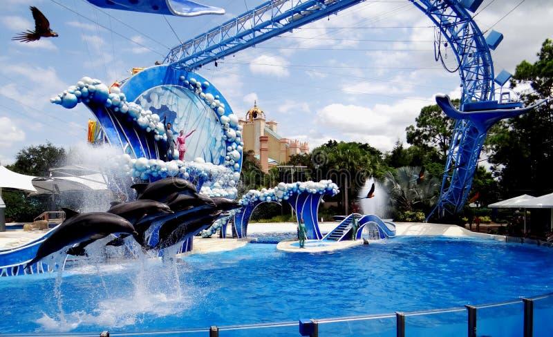 同时跳跃壮观的海豚 图库摄影