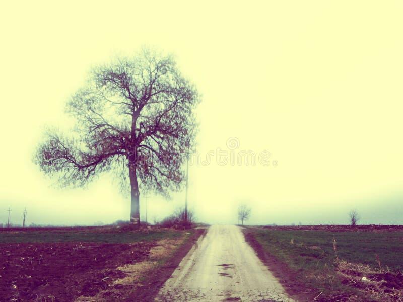 同样树,同样路 免版税库存照片