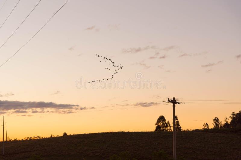后下午传输塔01 图库摄影
