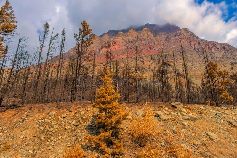 后果2015年雷诺兹小河荒地森林火灾冰川国家公园 免版税库存照片