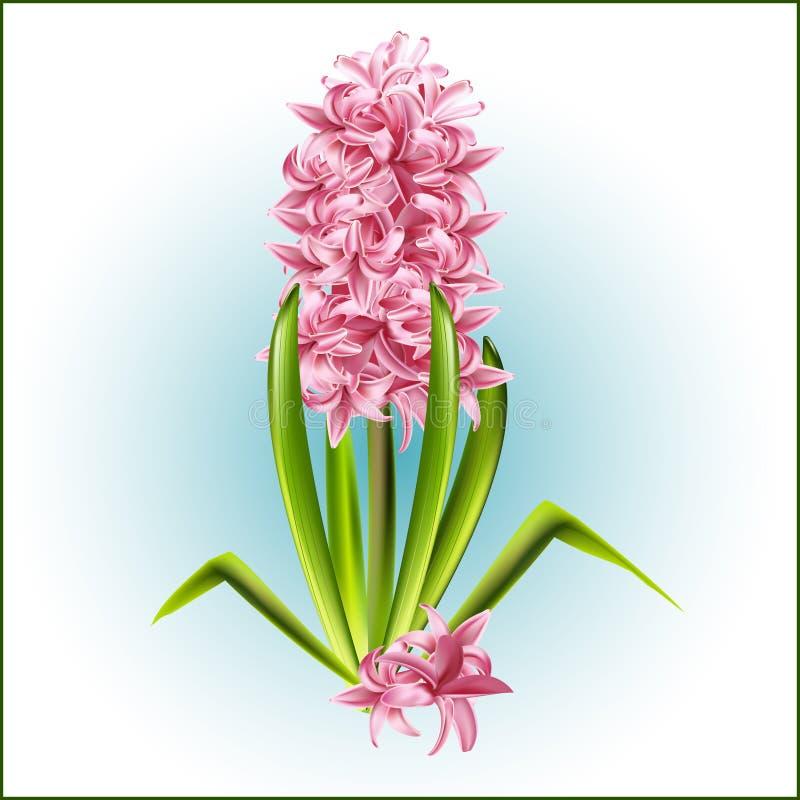 以后的春天,一株桃红色风信花的信使 向量例证