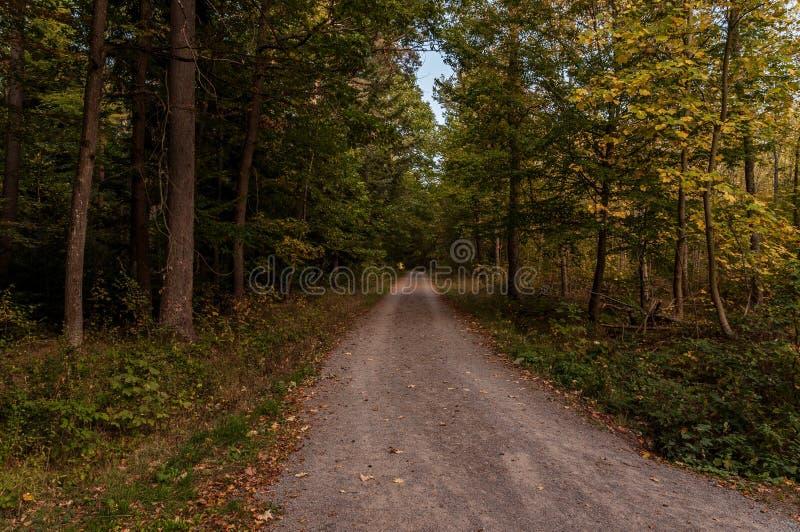 后退土路通过叶茂盛绿色森林地 免版税库存图片