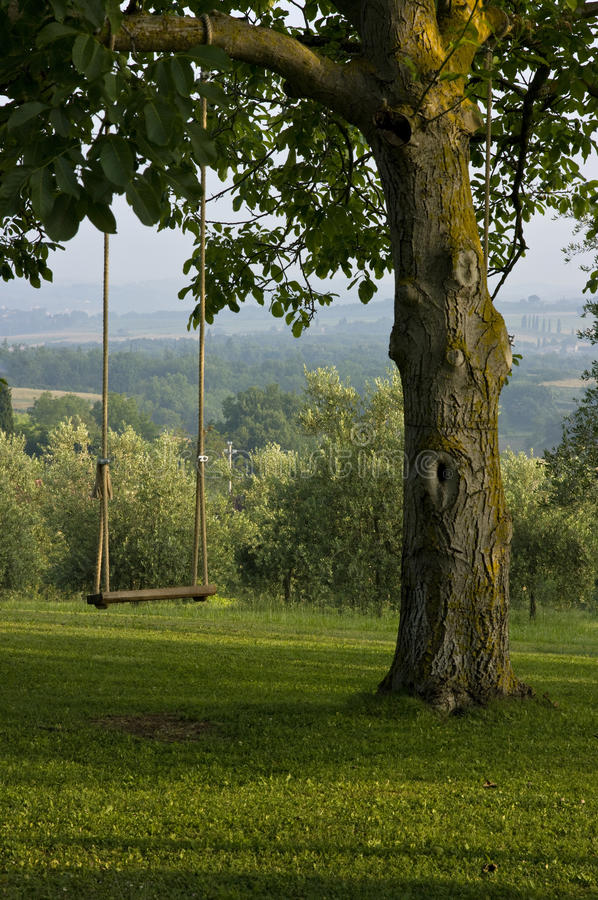 后院意大利摇摆结构树托斯卡纳垂直 库存照片