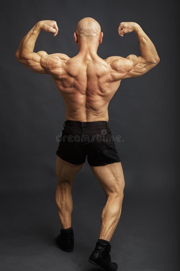 后面双重二头肌姿势的运动员 显示在演播室背景的爱好健美者肌肉 库存照片