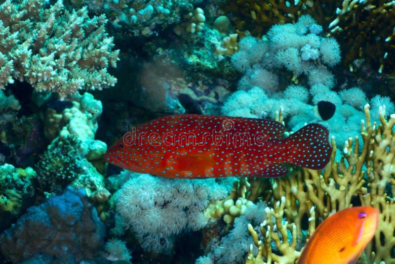 后面的珊瑚 免版税图库摄影