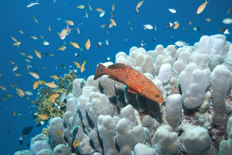 后面的珊瑚 库存照片