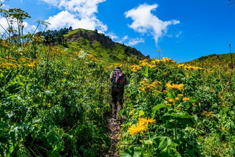 后面看法远足者在山草甸 免版税库存照片