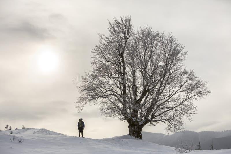 后面观点的有背包身分的旅游徒步旅行者在大树的白色干净的深雪在木质的山背景和多云 免版税图库摄影