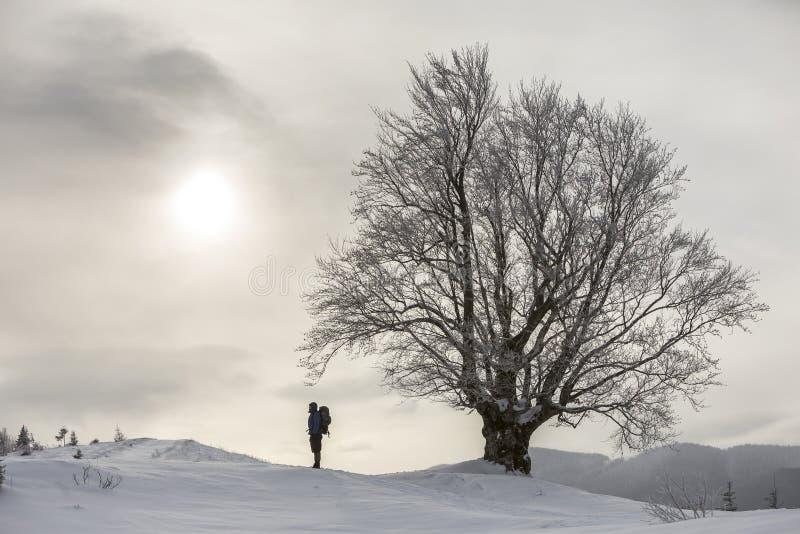 后面观点的有背包身分的旅游徒步旅行者在大树的白色干净的深雪在木质的山背景和多云 免版税库存照片