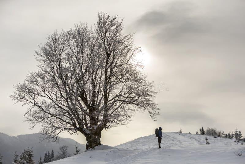 后面观点的有背包身分的旅游徒步旅行者在大树的白色干净的深雪在木质的山背景和多云 库存图片