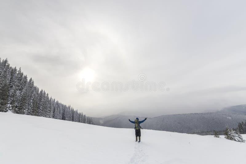 后面观点的温暖的衣物的旅游徒步旅行者有与被举的胳膊的背包身分的在用在云杉的森林的雪报道的清洁 图库摄影