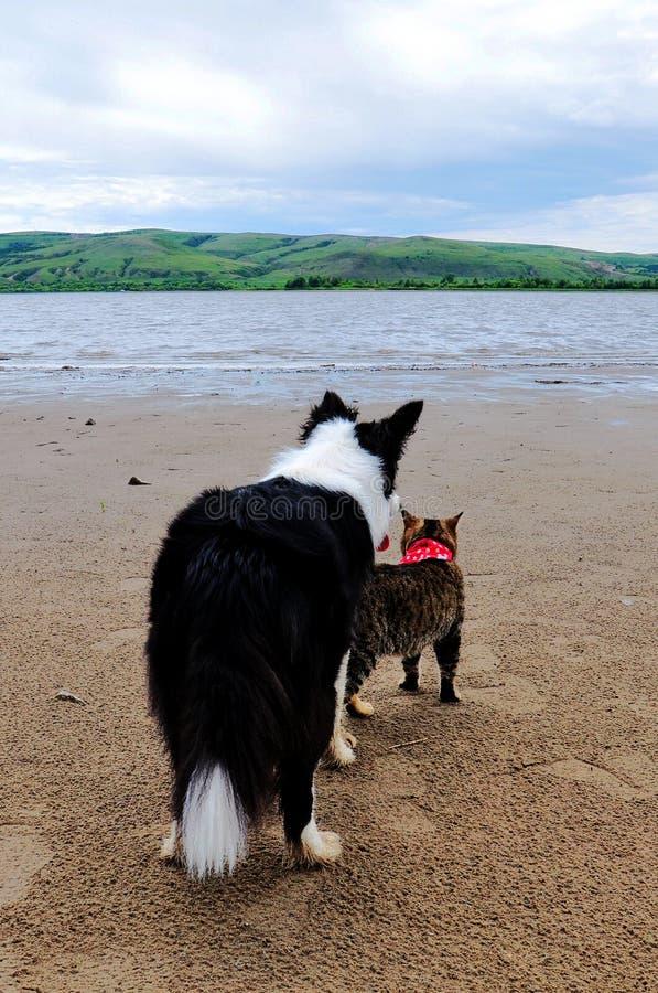 后面观点的CAT和狗在湖旁边 库存图片