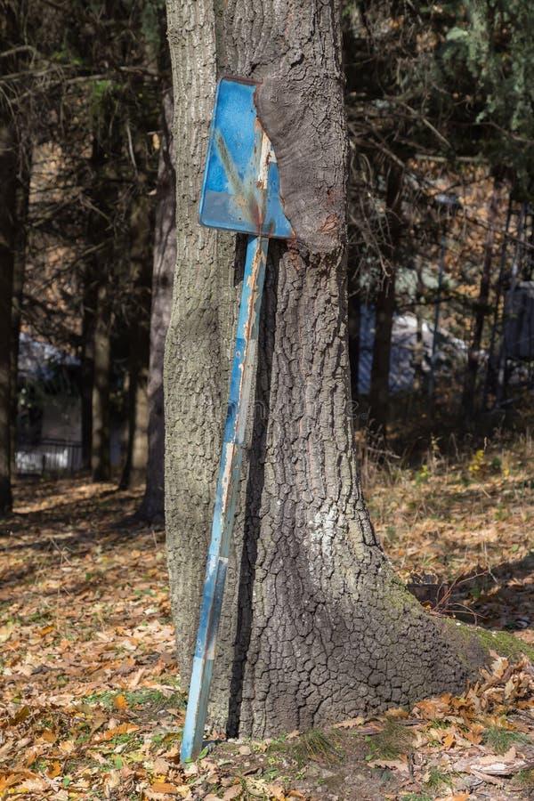 向内生长停车处签到树干2 免版税库存图片