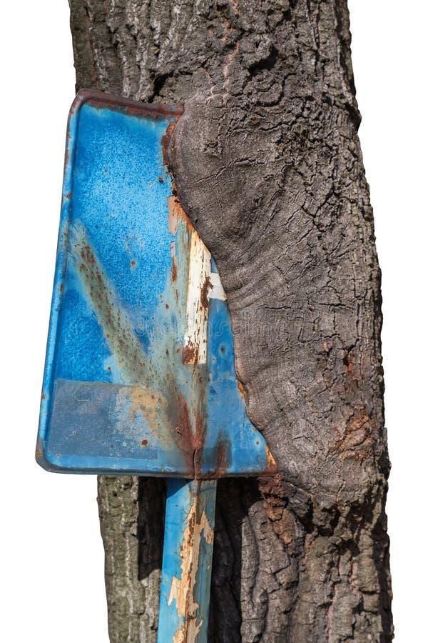 向内生长停车处签到树干3 免版税库存照片
