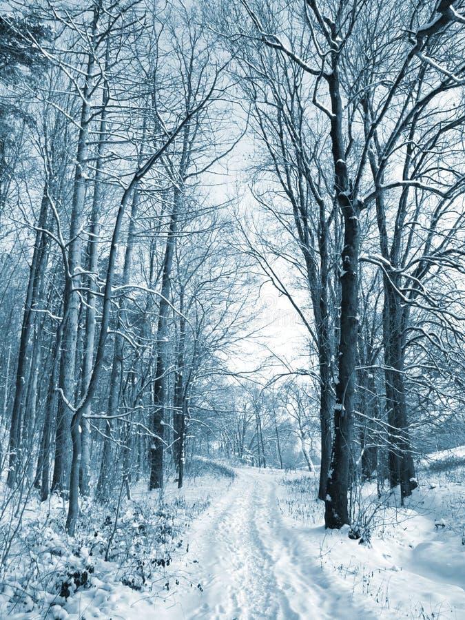 向冬天木头的路 免版税图库摄影