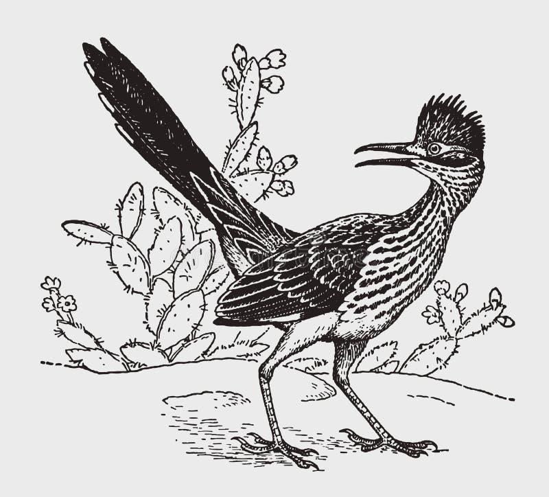 向后看一点走鹃尾骨的velox坐在仙人掌植物前面和 皇族释放例证