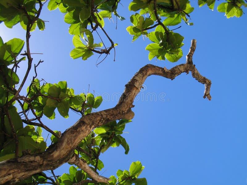向天空橡皮防水布螺母 库存照片