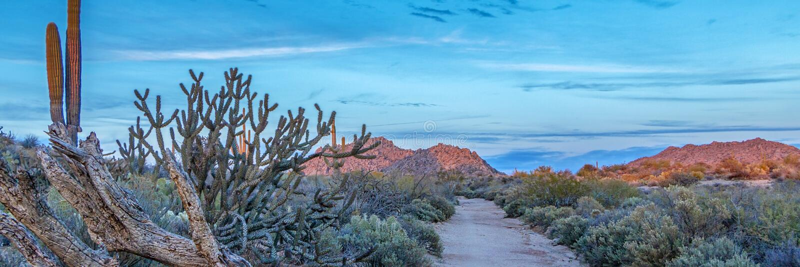 向天际的偏僻的沙漠日落路用仙人掌 免版税库存图片