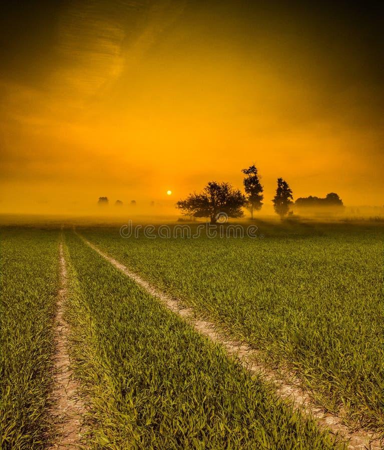 向太阳的草路 库存图片
