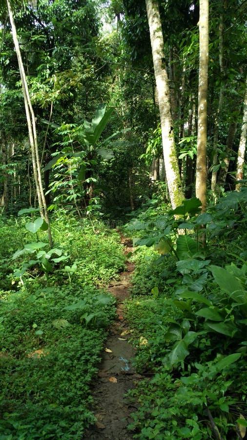 向小的森林的路在我的村庄附近 库存照片