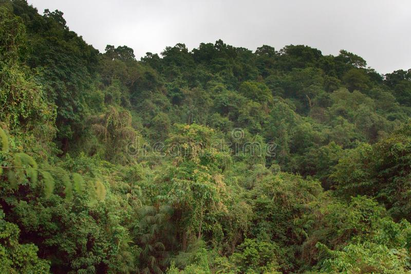 向山西高止山脉印度洋倾斜的雨林呼吁  免版税库存图片