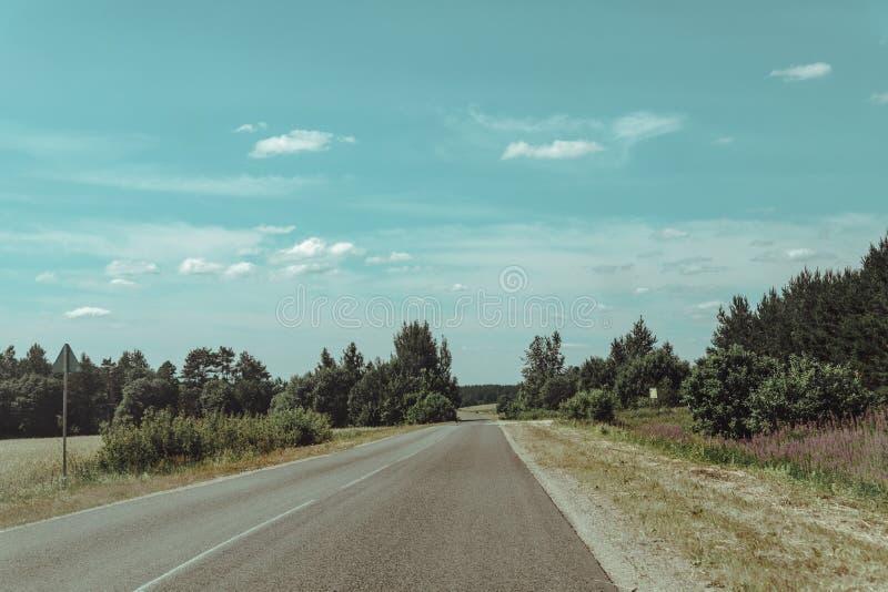 向无处的森林公路有在边线的松树的 免版税库存照片