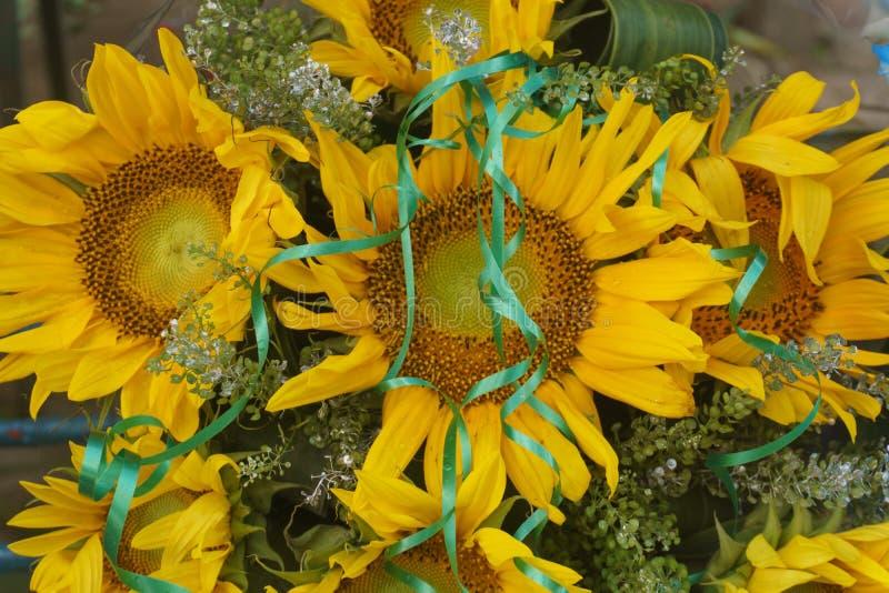 向日葵植物正面图  库存图片