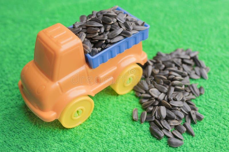 黑向日葵种子在一辆明亮的儿童` s玩具汽车背后肩并肩在绿色背景说谎并且说谎 库存图片