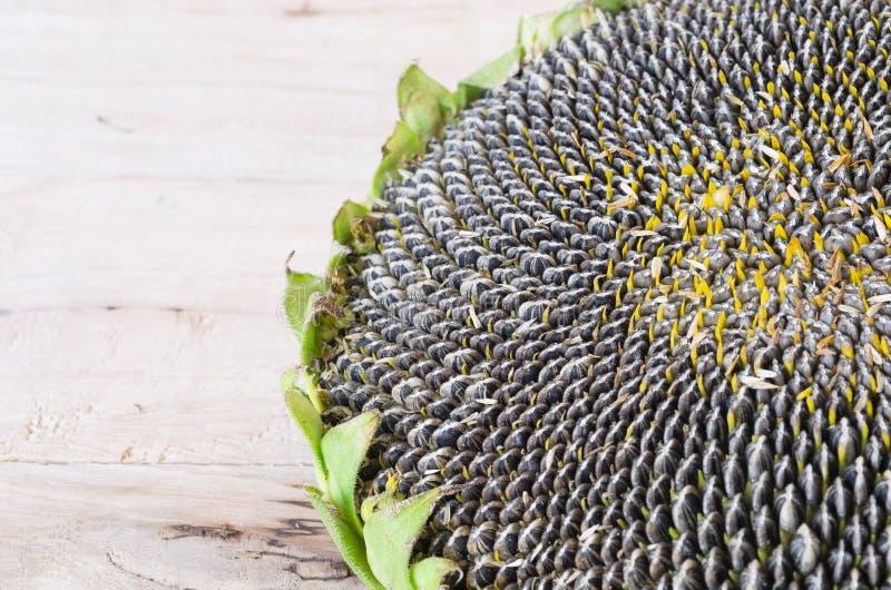 四p种子图片_向日葵种子植物在地方泰国