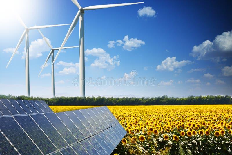 向日葵领域在光致电压的盘区反射了反对风轮机,可再造能源的概念从自然的 库存图片