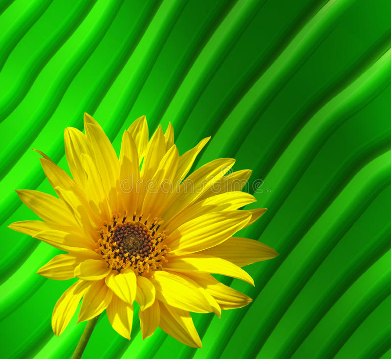向日葵黄色 库存例证