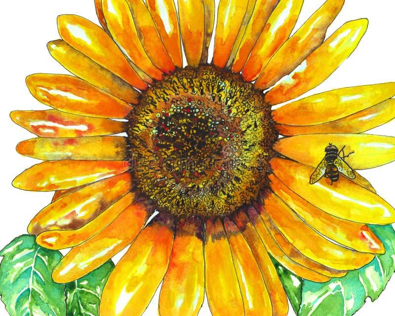 向日葵水彩 向量例证