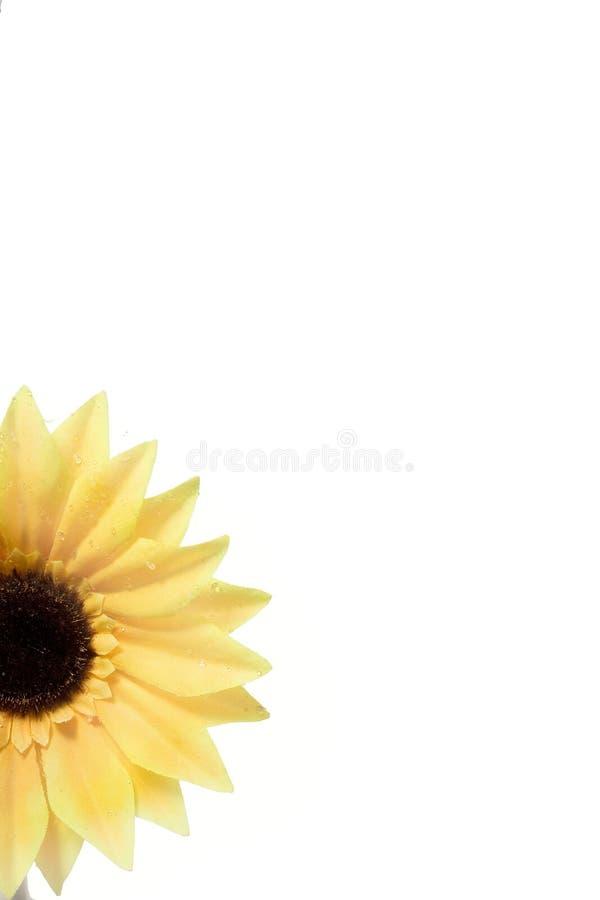 向日葵 库存图片