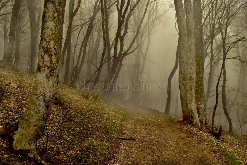 有雾的森林 库存图片