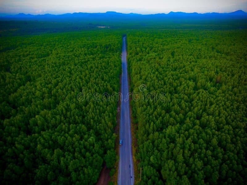 向森林的鸟瞰图路 免版税库存照片