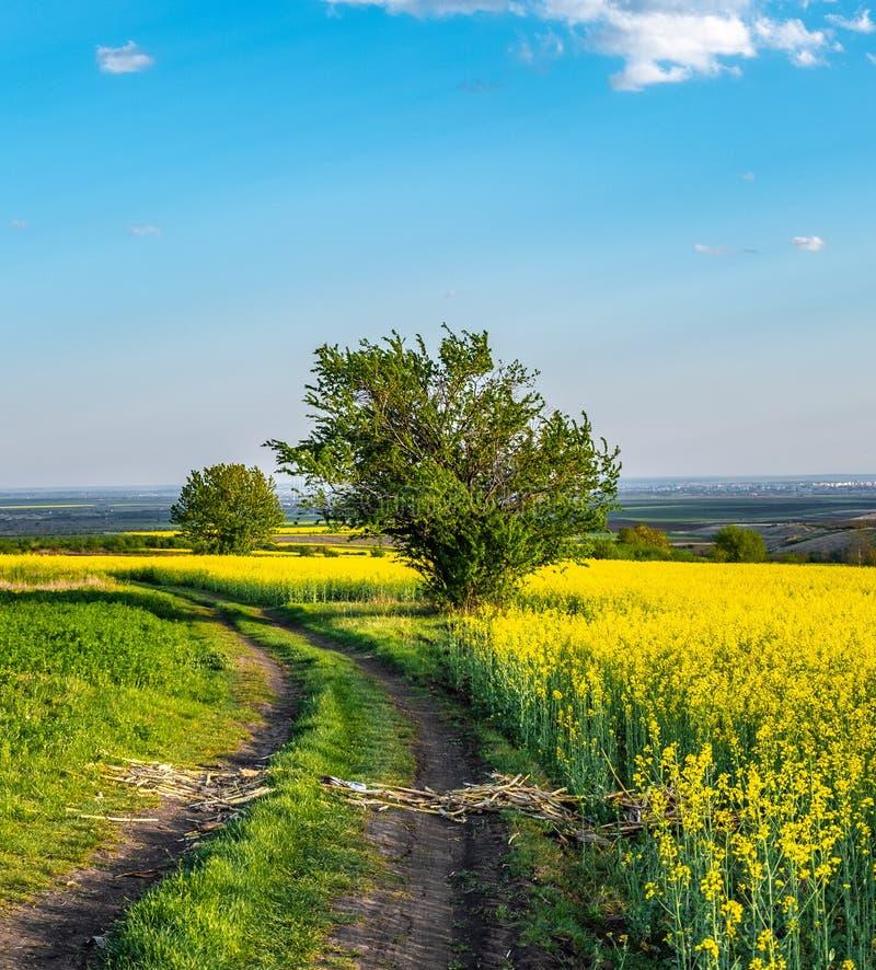 向油菜籽领域的乡下公路 免版税库存图片