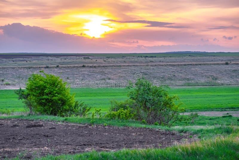 向油菜籽领域的乡下公路 库存图片