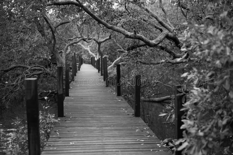 向深森林灌木的木道路 免版税库存图片