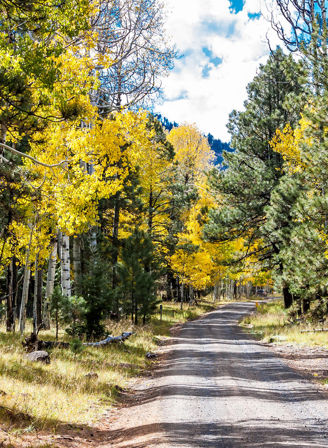 向秋天白杨木的路 库存图片