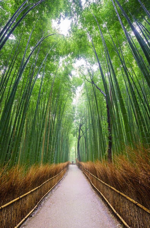 向竹森林,京都,日本的道路 免版税图库摄影