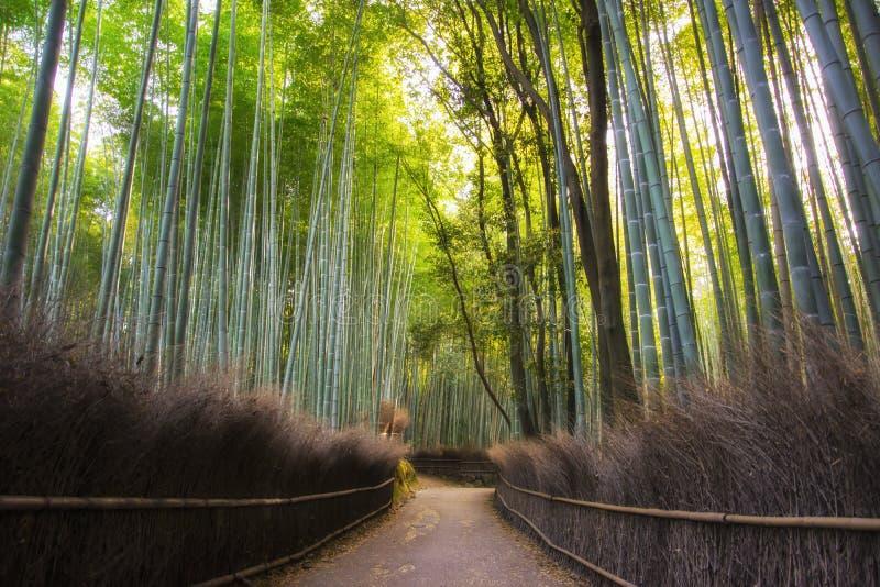 向竹森林, Arashiyama,京都,日本的道路 充满活力的早晨 免版税库存照片