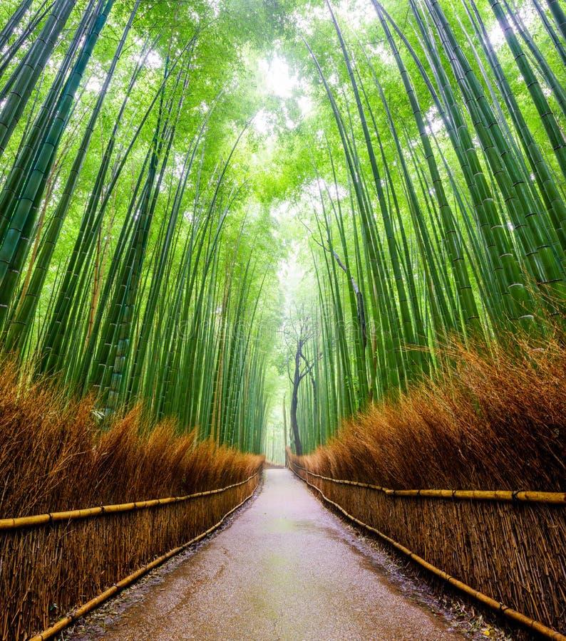 向竹森林, Arashiyama,京都,日本的道路 免版税库存照片