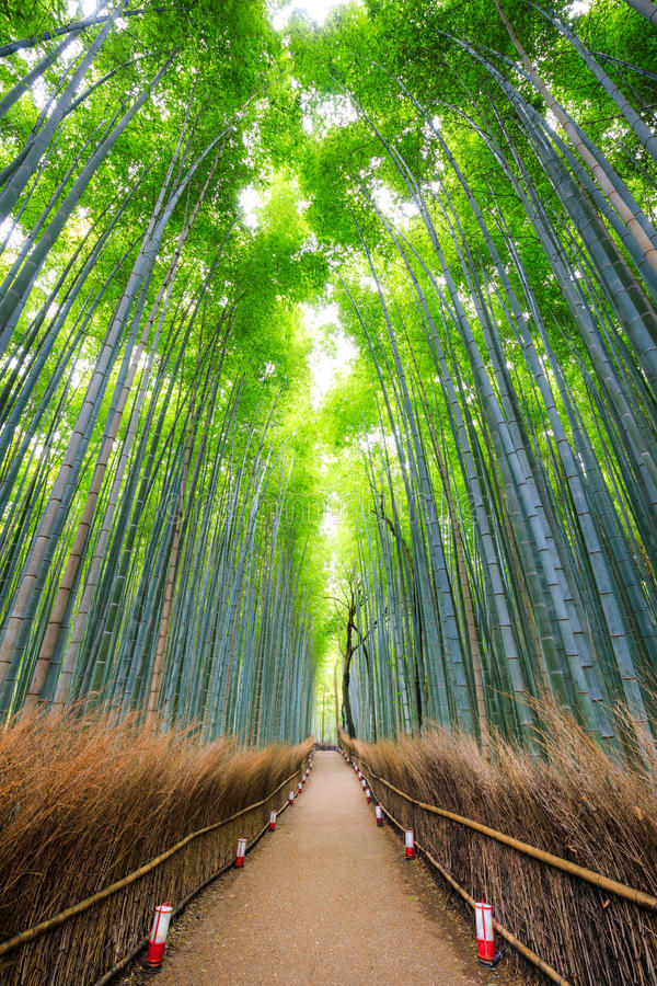 向竹森林, Arashiyama,京都,日本的道路 免版税库存图片