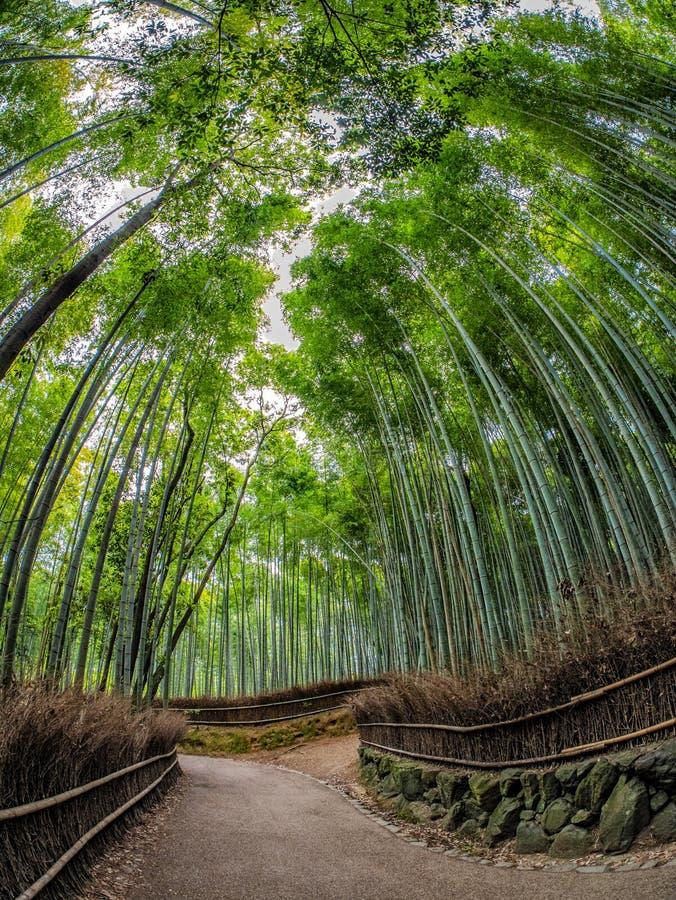 向竹森林,Arashiyama,京都,日本的道路 库存照片