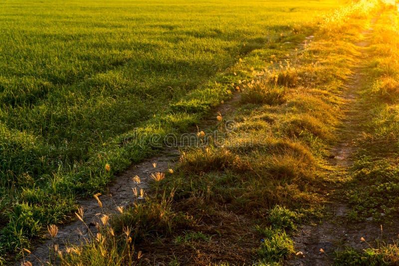向米农场的粗砺的路早晨光的 免版税库存照片