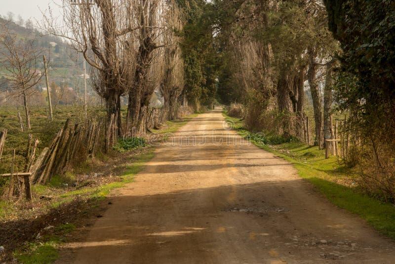 向茶领域农场的乡下公路有早晨太阳光线影响的 剧烈,农村和风景主导的路照片 免版税图库摄影